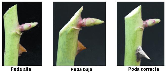 Hortensia Informacion Sobre La Planta Propiedades Y Cultivo - Hortensias-cuidados-poda