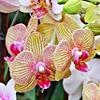Temperatura y ventilación por las orquídeas