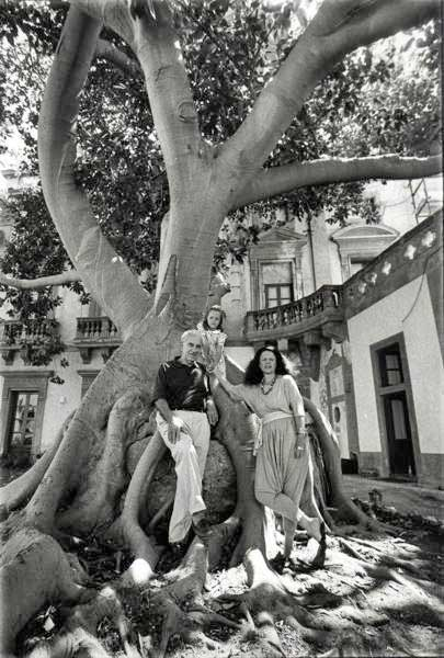 Ficus elastica monumentale
