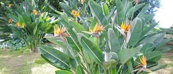 problemi piante, piante malate, pianta malata