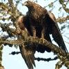 Uccelli, rubrica sugli uccelli,Aves