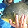 Pesci, rubrica sui pesci