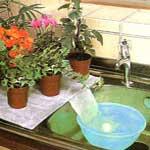 Come annaffiare le piante durante le vacanze