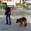 L'amore di un uomo per il proprio cane