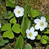 Piante barometro: piante che prevedono il tempo