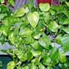 Conoscere le piante della propria casa e imparare a non farle morire