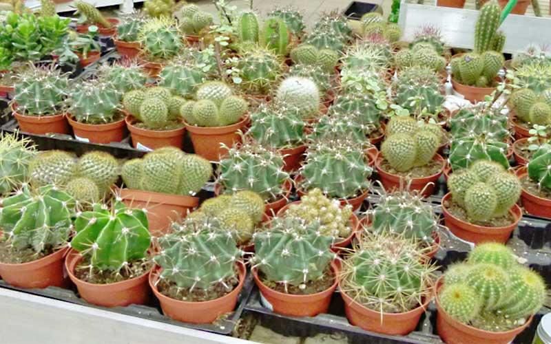 Piante grasse e cactus