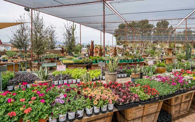 Consigli su come acquistare una pianta in un vivaio