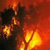 Le cause degli incendi boschivi