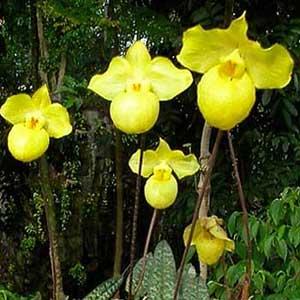 Il significato delle  orchidee