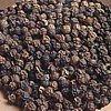 Pepe, Piper nigrum, piante aromatiche, proprietà e coltivazione