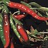 Pepe di Cayenna, Capsicum annuum varietà annuum gruppo cayenna, piante aromatiche, proprietà e coltivazione