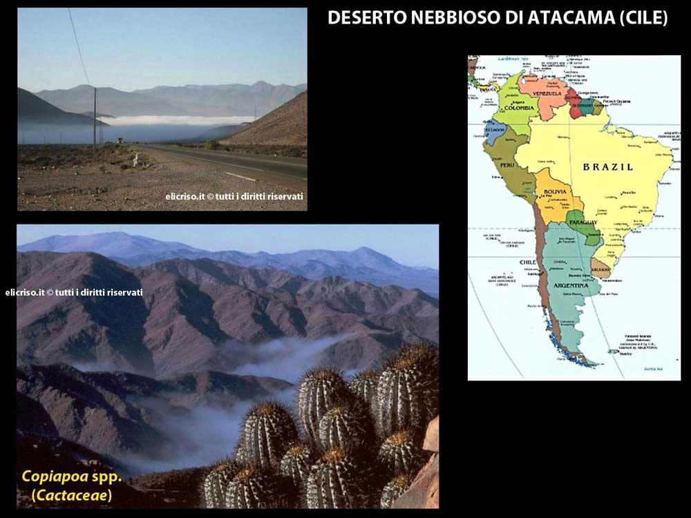Deserto nebbioso Atacama in Cile