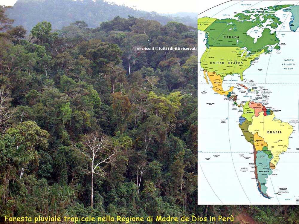 Piante grasse delle foreste pluviali