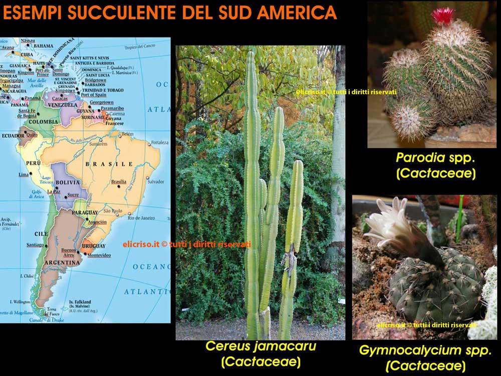 Piante grasse o succulente del sud America