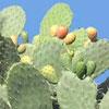 Da dove deriva il termine cactus riferito alle piante grasse