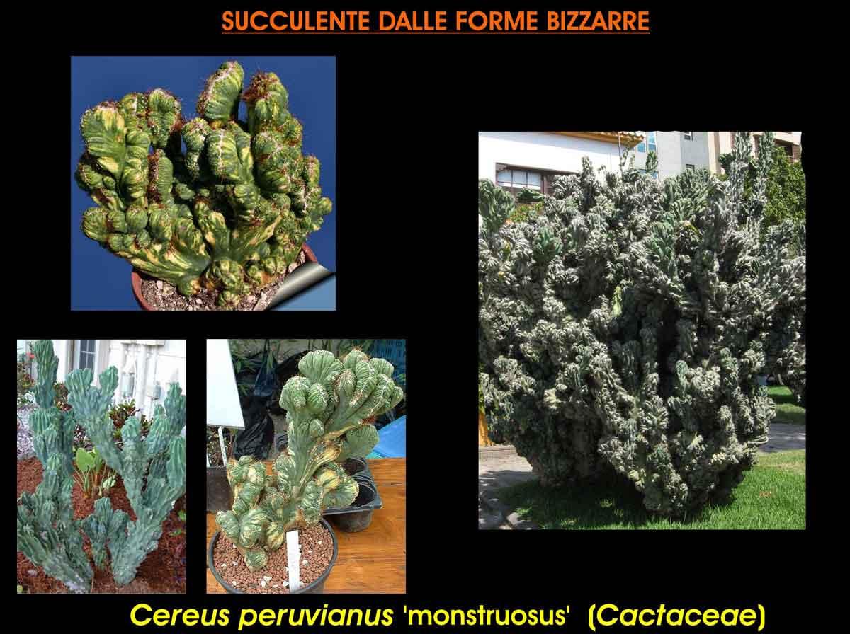 Piante grasse o cactus dalle forme strane