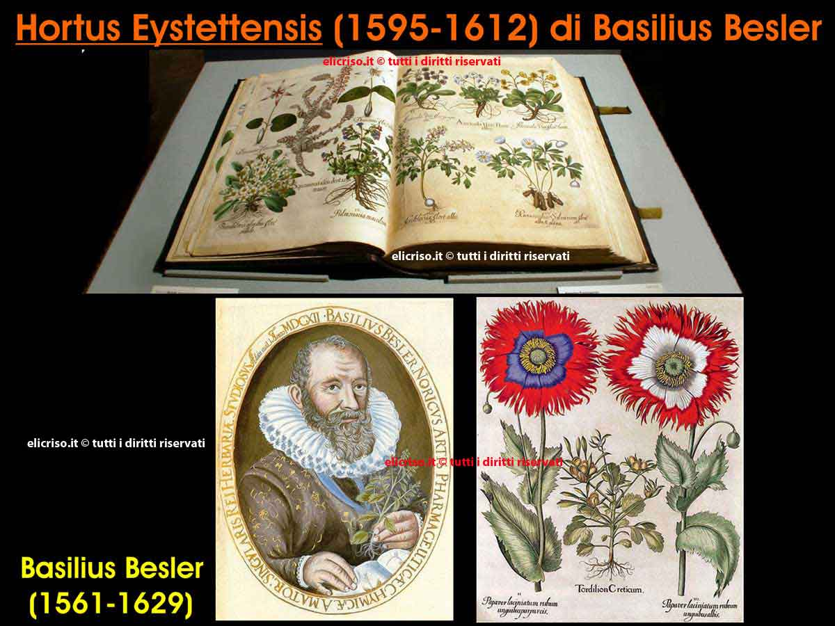 Hortus eystettensis di Basilius Besler