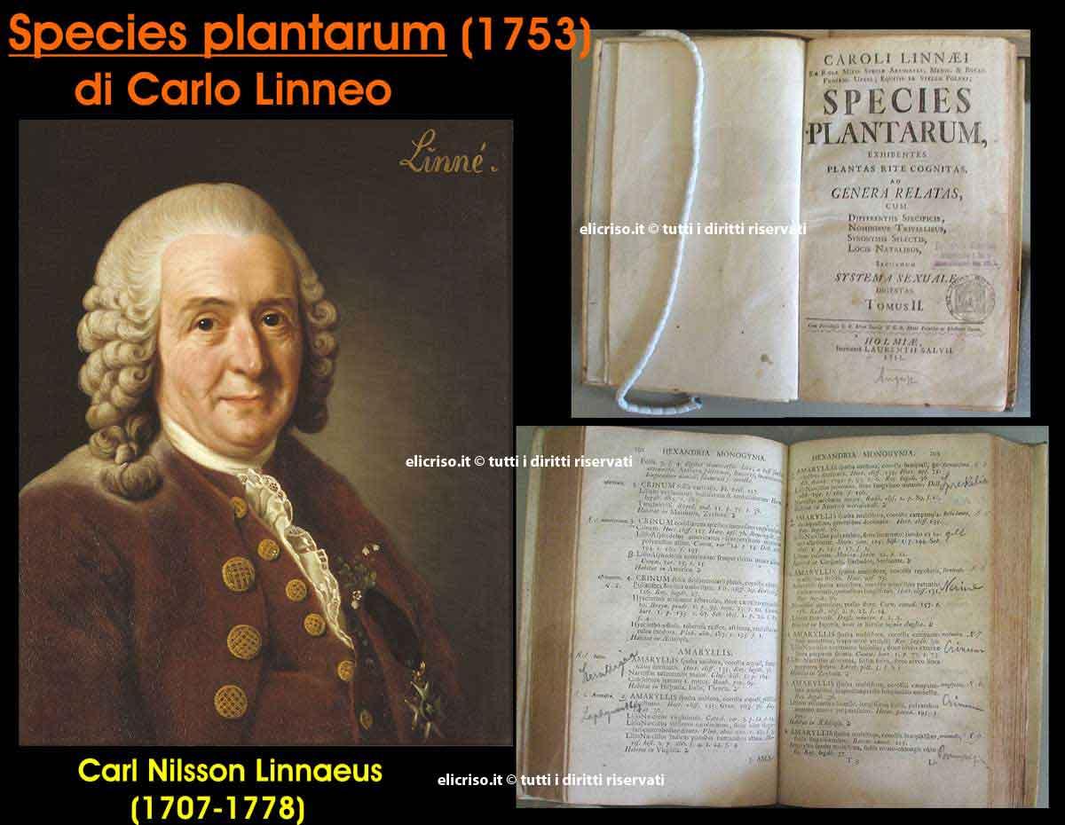 Species plantarum di Carlo Linneo