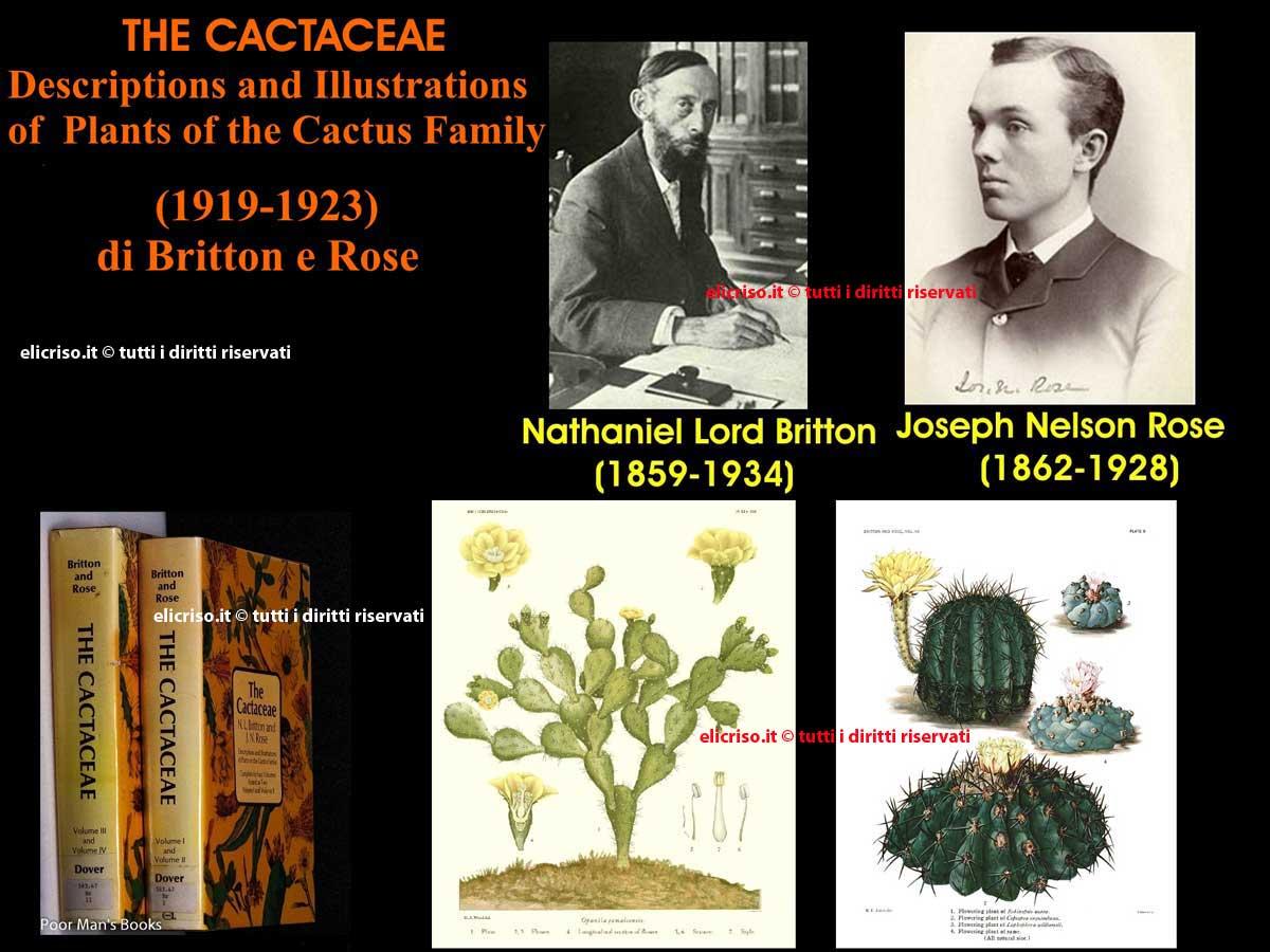 The Cactaceae di Britton e Rose nel 1919 e il 1923