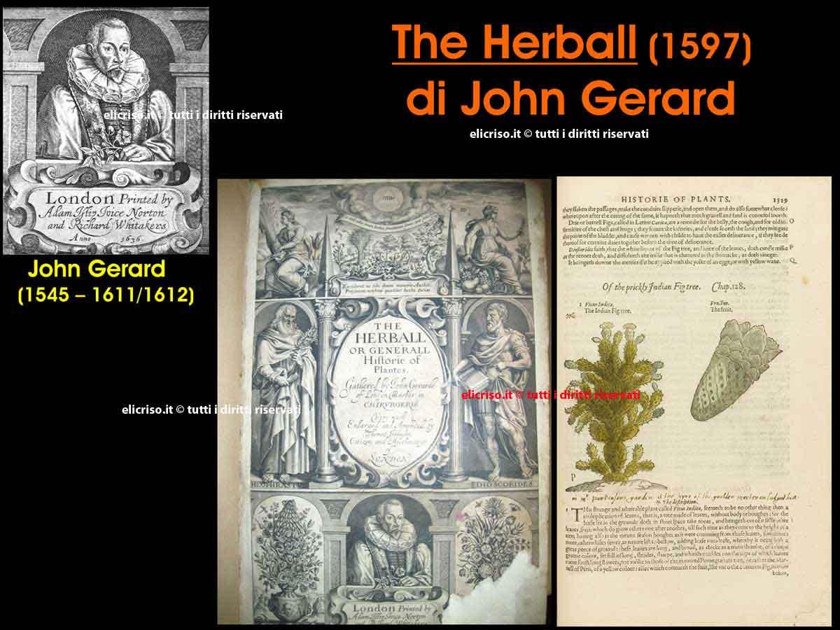 The Herball di John Gerard (1545-1611/12)