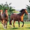 La via del cavallo. Esperienze e riflessioni di un principiante