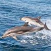 L'uomo dei delfini