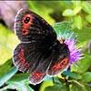 Nel regno delle farfalle