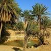 Racconto di un viaggio in Tunisia