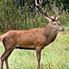 I versi e suoni emessi dagli animali terrestri