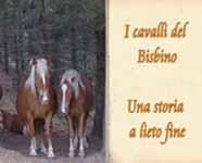 Cavalli del Bisbino: la loro storia